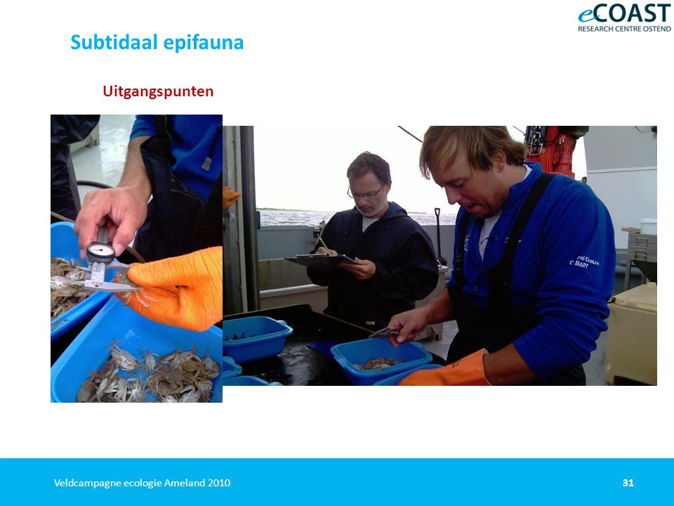 31Veldcampagne ecologie Ameland 2010 Uitgangspunten uitgaan van het systeem Kostenefficient 1 2 op basis van Jarkus-raaien vangst verwerken aan boord commercieel schip Subtidaal epifauna