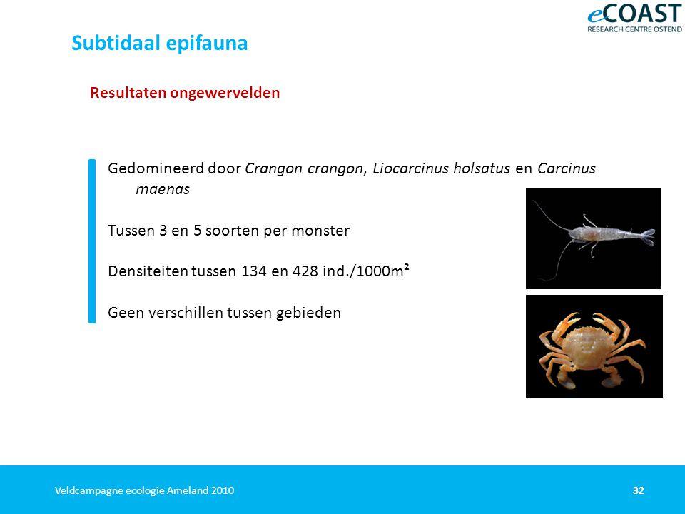 32Veldcampagne ecologie Ameland 2010 Resultaten ongewervelden Gedomineerd door Crangon crangon, Liocarcinus holsatus en Carcinus maenas Tussen 3 en 5 soorten per monster Densiteiten tussen 134 en 428 ind./1000m² Geen verschillen tussen gebieden Subtidaal epifauna
