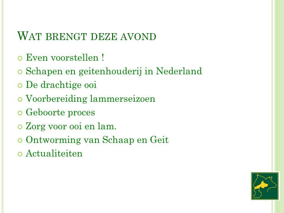 W AT BRENGT DEZE AVOND Even voorstellen ! Schapen en geitenhouderij in Nederland De drachtige ooi Voorbereiding lammerseizoen Geboorte proces Zorg voo
