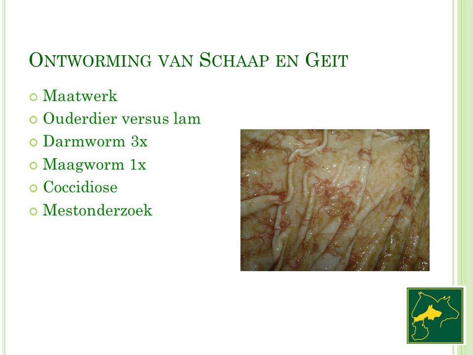 O NTWORMING VAN S CHAAP EN G EIT Maatwerk Ouderdier versus lam Darmworm 3x Maagworm 1x Coccidiose Mestonderzoek