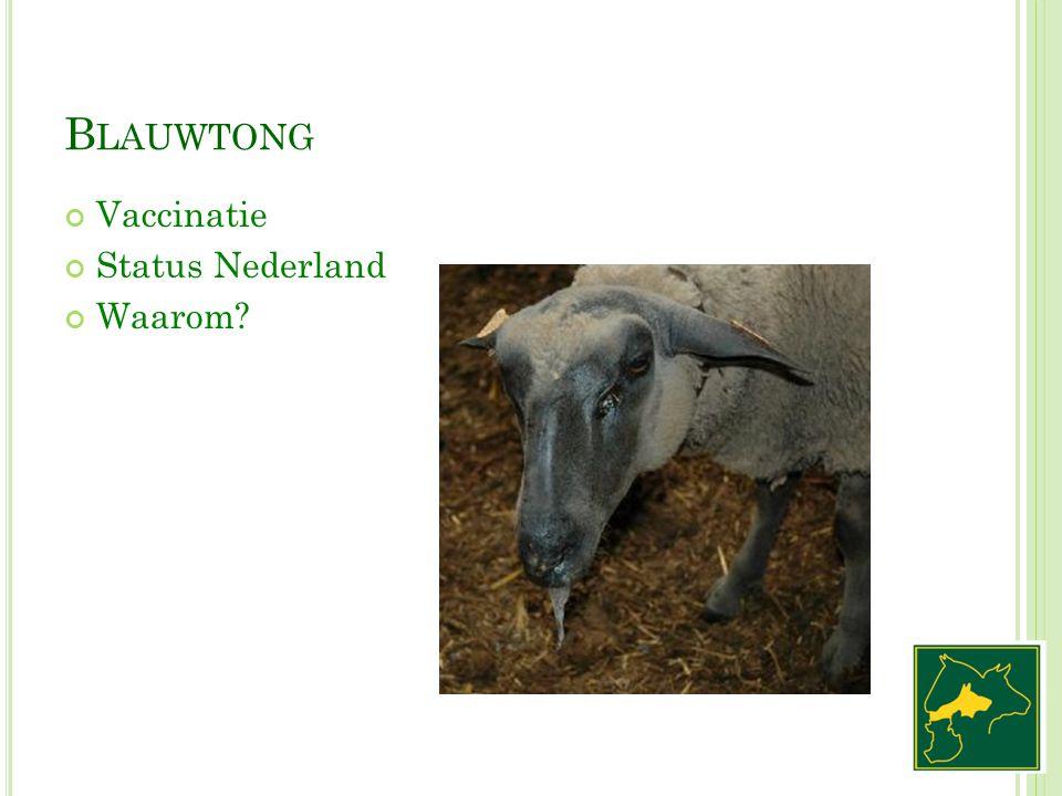 B LAUWTONG Vaccinatie Status Nederland Waarom?