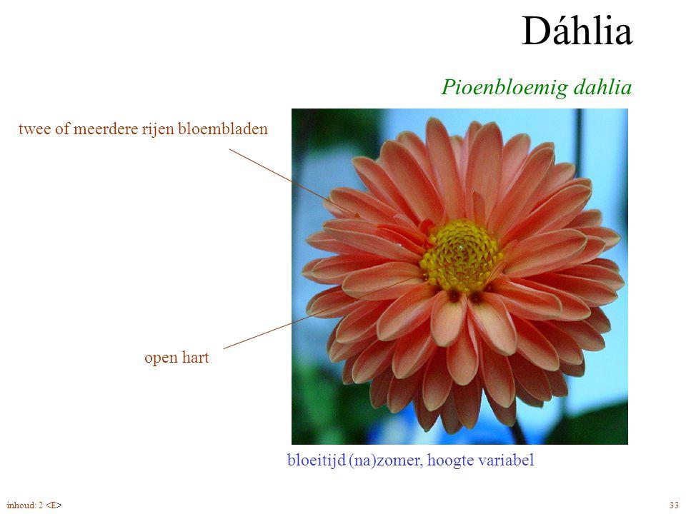 Dáhlia pioenbloemig bloeitijd (na)zomer, hoogte variabel Pioenbloemig dahlia Dáhlia twee of meerdere rijen bloembladen open hart inhoud: 2 33