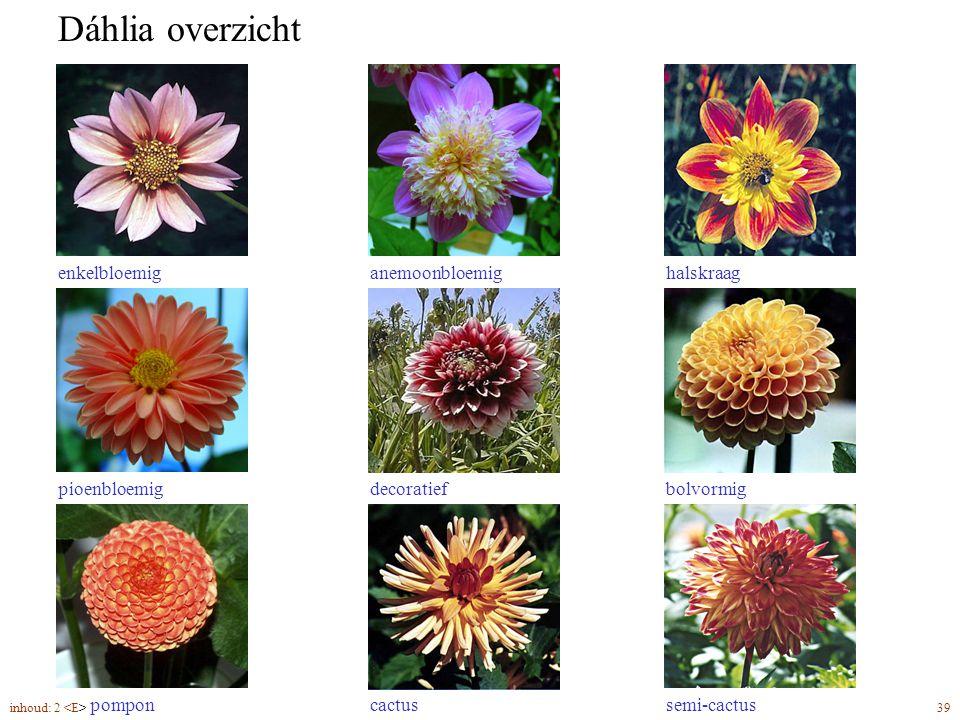 Dáhlia overzicht enkelbloemiganemoonbloemig bolvormigdecoratiefpioenbloemig pomponcactussemi-cactus halskraag inhoud: 2 39