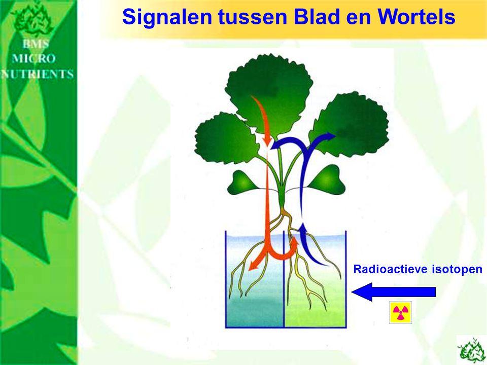 Signalen tussen Blad en Wortels Radioactieve isotopen
