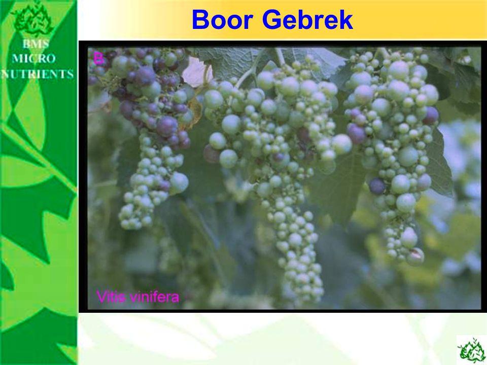 Boor Gebrek