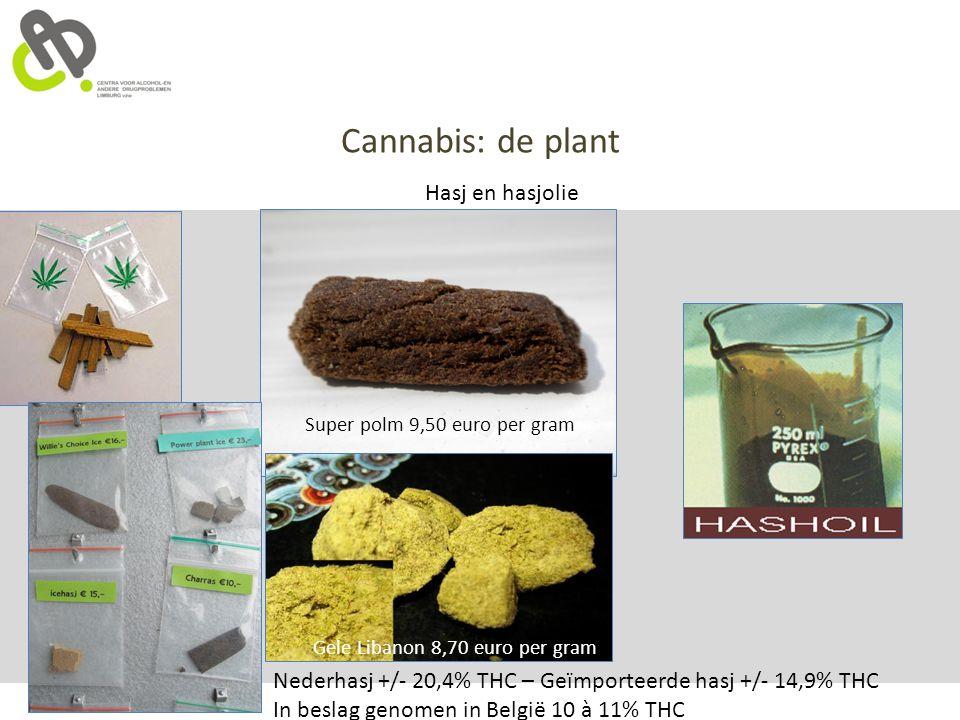 Cannabis: de plant Hasj en hasjolie Super polm 9,50 euro per gram Gele Libanon 8,70 euro per gram Nederhasj +/- 20,4% THC – Geïmporteerde hasj +/- 14,