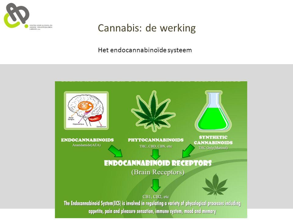 Cannabis: de werking Het endocannabinoïde systeem