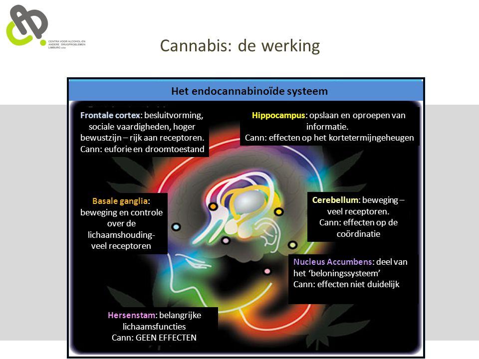 Cannabis: de werking Het endocannabinoïde systeem Hippocampus: opslaan en oproepen van informatie. Cann: effecten op het kortetermijngeheugen Cerebell