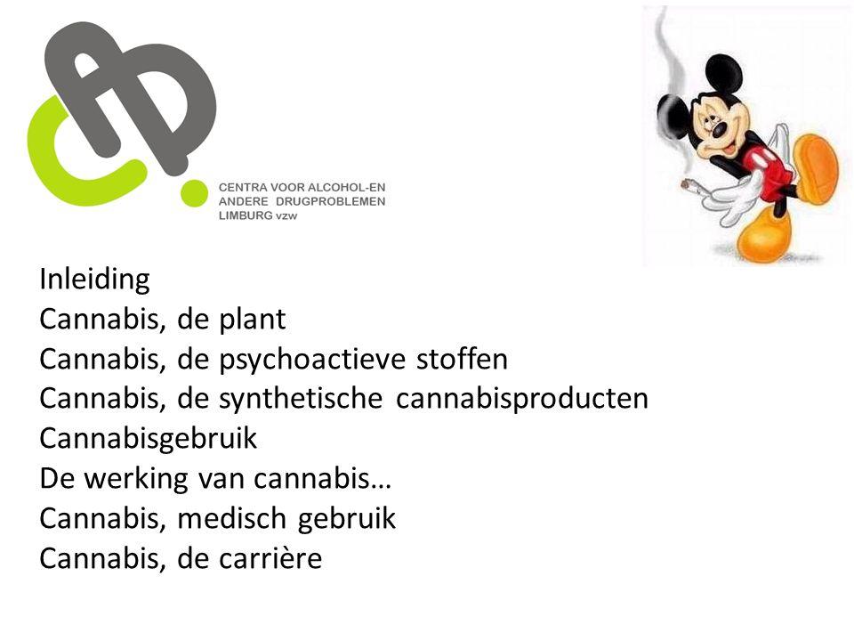 Inleiding Cannabis, de plant Cannabis, de psychoactieve stoffen Cannabis, de synthetische cannabisproducten Cannabisgebruik De werking van cannabis… C