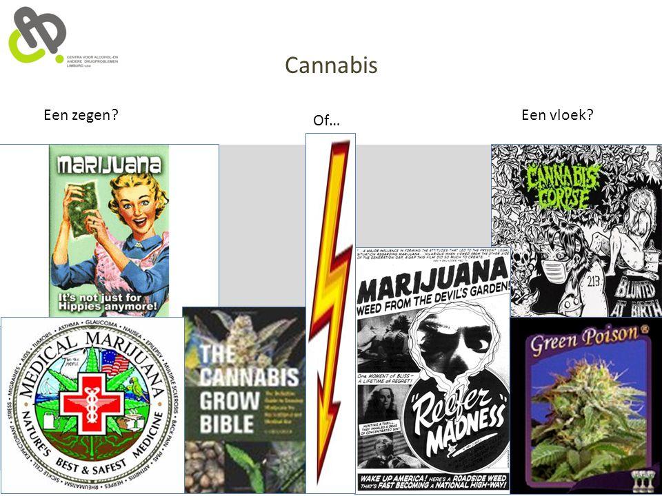 Cannabis Een zegen? Of… Een vloek?