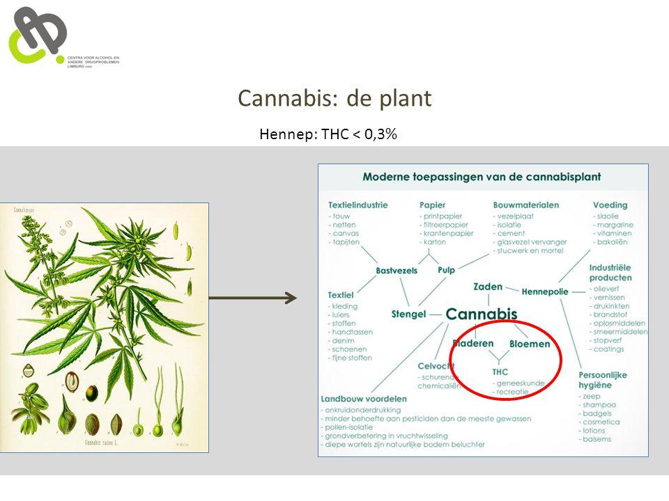 Cannabis: de plant Hennep: THC < 0,3%