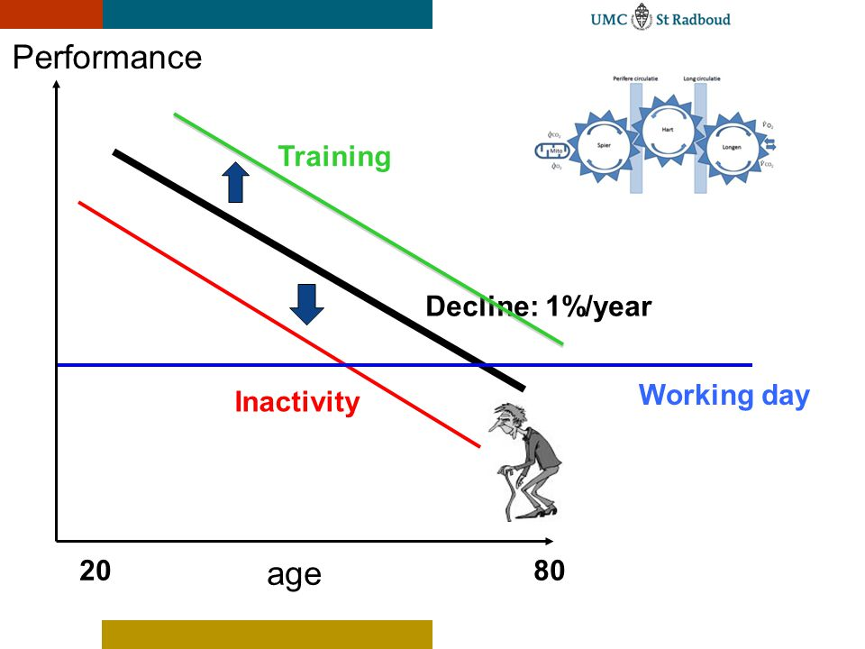 Performance age 2080 Decline: 1%/year Inactivity Training Working day