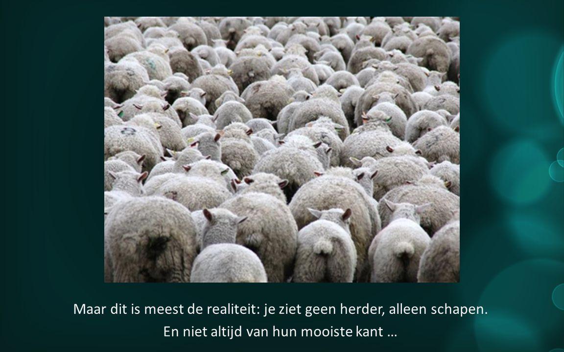 Maar dit is meest de realiteit: je ziet geen herder, alleen schapen.