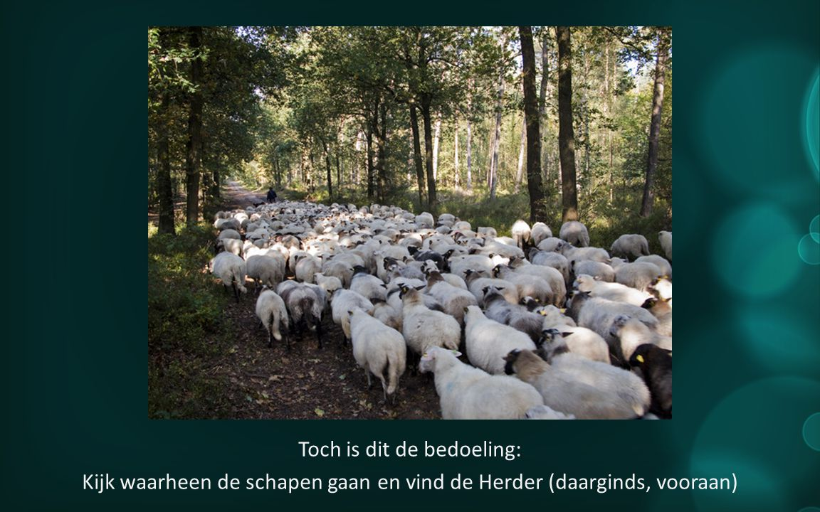 Toch is dit de bedoeling: Kijk waarheen de schapen gaan en vind de Herder (daarginds, vooraan)
