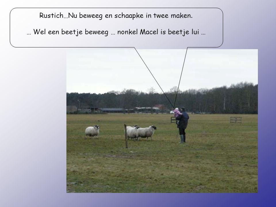 Rustich…Nu beweeg en schaapke in twee maken. … Wel een beetje beweeg … nonkel Macel is beetje lui …