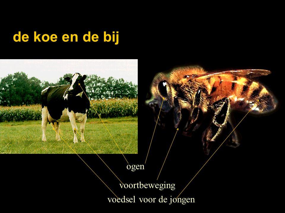 de koe en de bij voortbeweging voedsel voor de jongen ogen