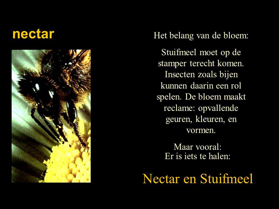 nectar Het belang van de bloem: Stuifmeel moet op de stamper terecht komen. Insecten zoals bijen kunnen daarin een rol spelen. De bloem maakt reclame: