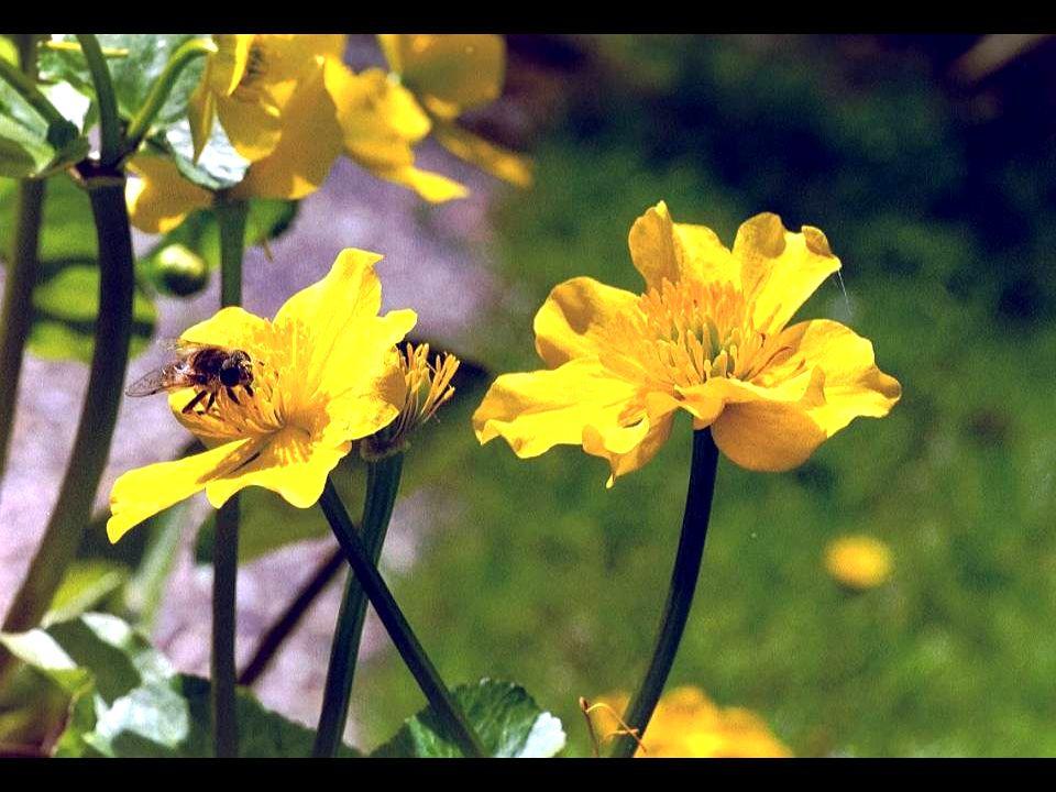 Nectar: 80 % water 20 % zoete stof Honing: 20 % water 80 % zoete stof Verzegeldehoningcellen