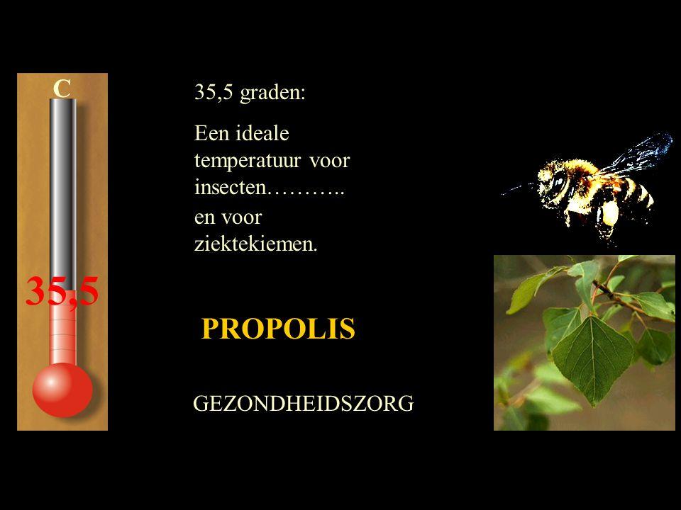 C 35,5 35,5 graden: Een ideale temperatuur voor insecten……….. PROPOLIS GEZONDHEIDSZORG en voor ziektekiemen.