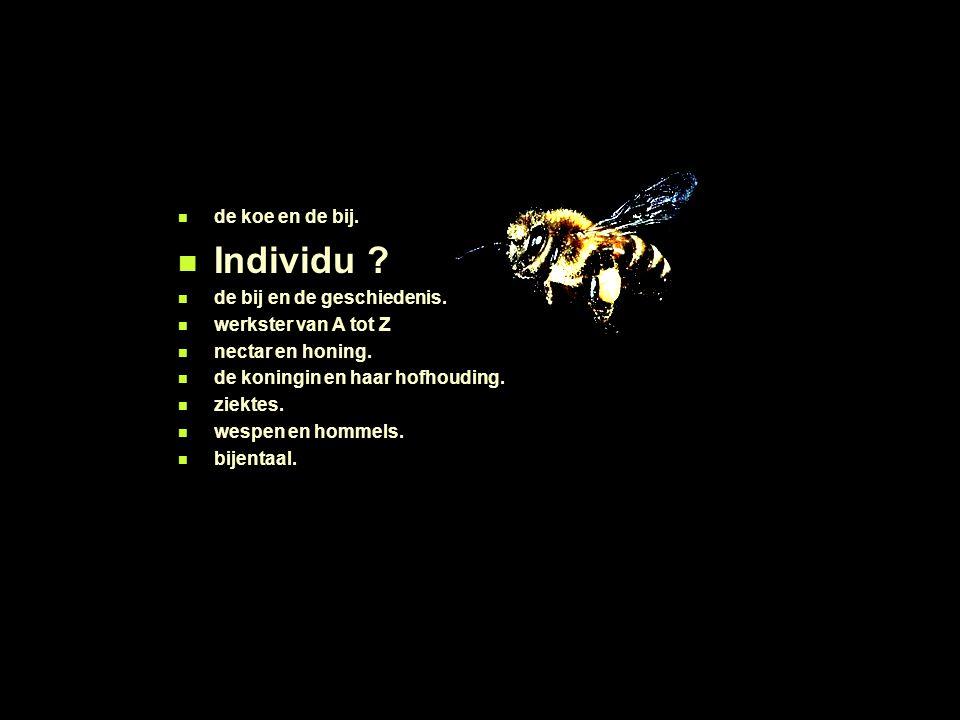 de koe en de bij. Individu ? de bij en de geschiedenis. werkster van A tot Z nectar en honing. de koningin en haar hofhouding. ziektes. wespen en homm