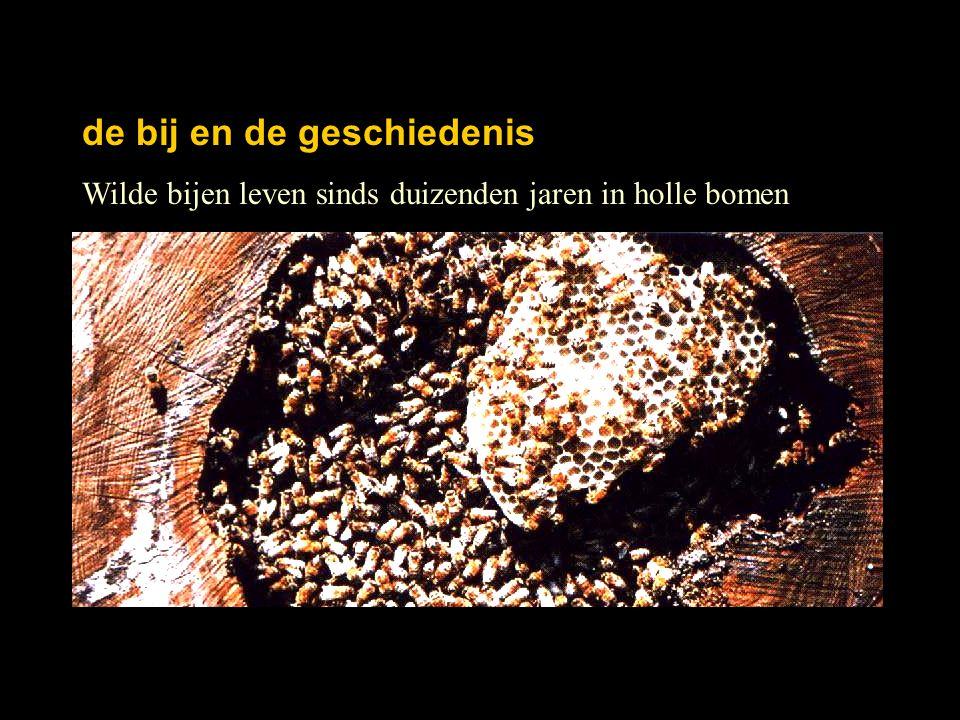Wilde bijen leven sinds duizenden jaren in holle bomen de bij en de geschiedenis