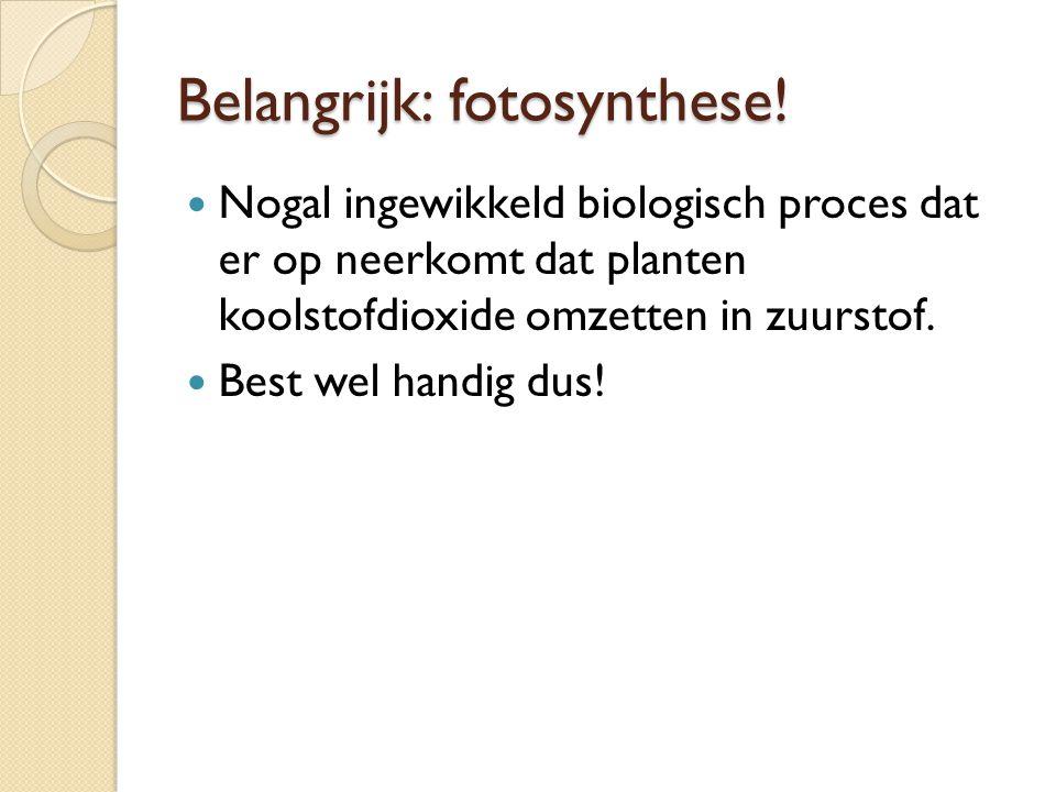 Belangrijk: fotosynthese! Nogal ingewikkeld biologisch proces dat er op neerkomt dat planten koolstofdioxide omzetten in zuurstof. Best wel handig dus