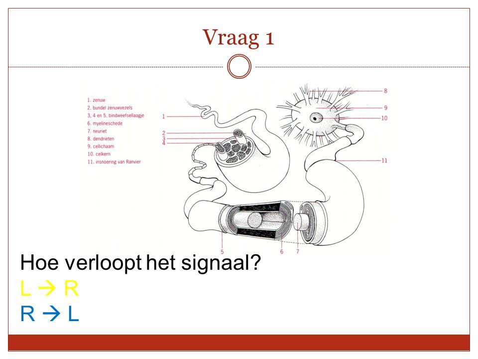 Vraag 1 Hoe verloopt het signaal? L  R R  L
