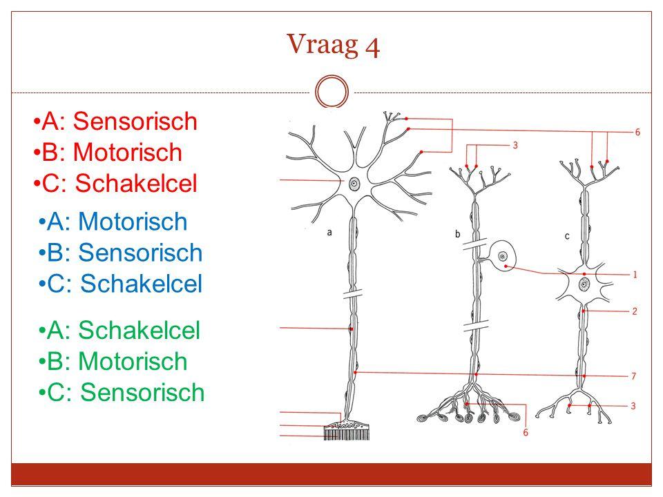 A: Sensorisch B: Motorisch C: Schakelcel Vraag 4 A: Schakelcel B: Motorisch C: Sensorisch A: Motorisch B: Sensorisch C: Schakelcel