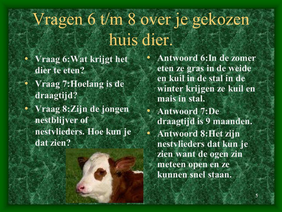 5 Vragen 6 t/m 8 over je gekozen huis dier. Vraag 6:Wat krijgt het dier te eten? Vraag 7:Hoelang is de draagtijd? Vraag 8:Zijn de jongen nestblijver o