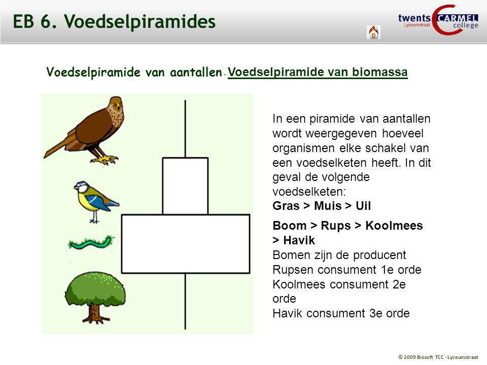 © 2009 Biosoft TCC - Lyceumstraat EB 6. Voedselpiramides Voedselpiramide van aantallen - Voedselpiramide van biomassa Voedselpiramide van biomassa In