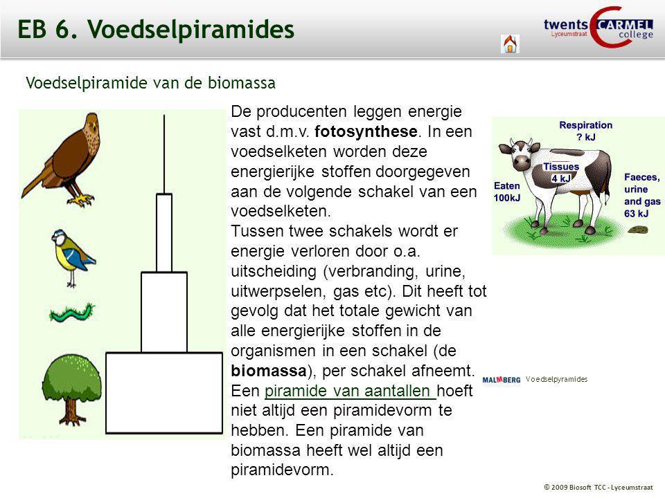 © 2009 Biosoft TCC - Lyceumstraat EB 6. Voedselpiramides Voedselpiramide van de biomassa De producenten leggen energie vast d.m.v. fotosynthese. In ee