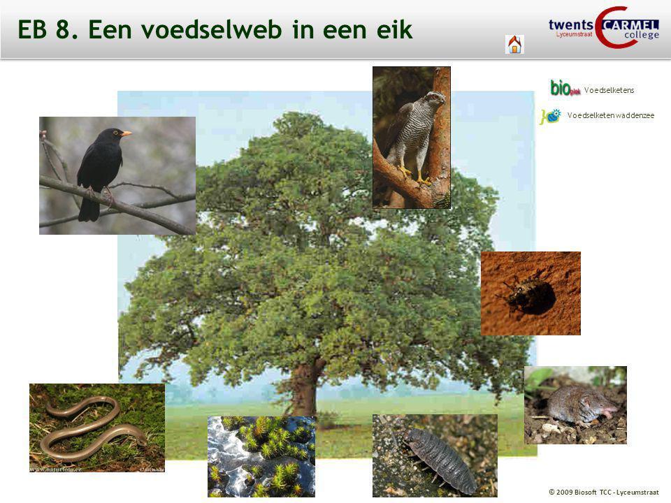 © 2009 Biosoft TCC - Lyceumstraat EB 8. Een voedselweb in een eik Voedselketens Voedselketen waddenzee
