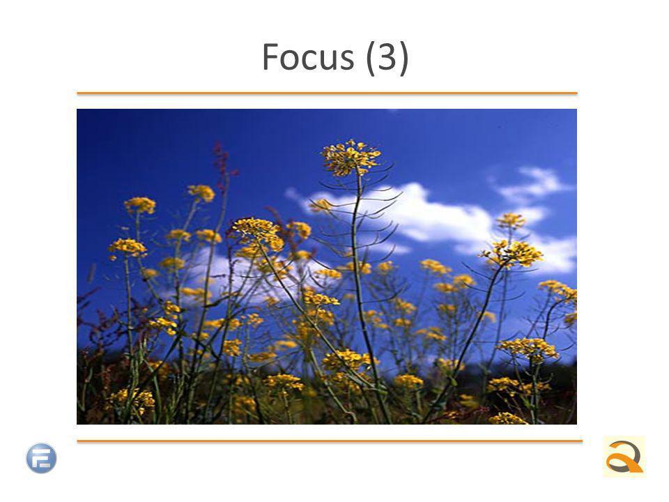 Focus (3)