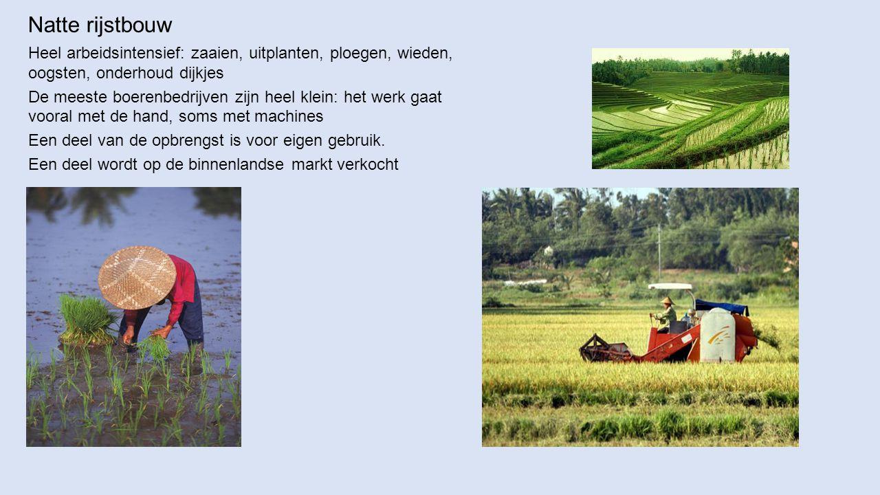 Natte rijstbouw Heel arbeidsintensief: zaaien, uitplanten, ploegen, wieden, oogsten, onderhoud dijkjes De meeste boerenbedrijven zijn heel klein: het