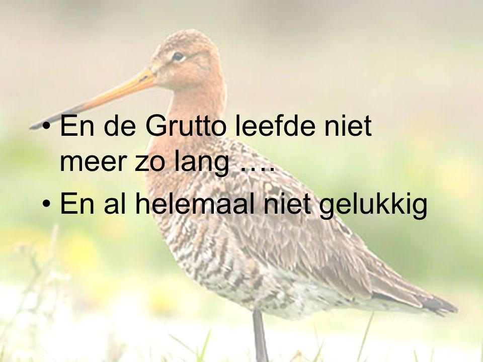 En de Grutto leefde niet meer zo lang …. En al helemaal niet gelukkig