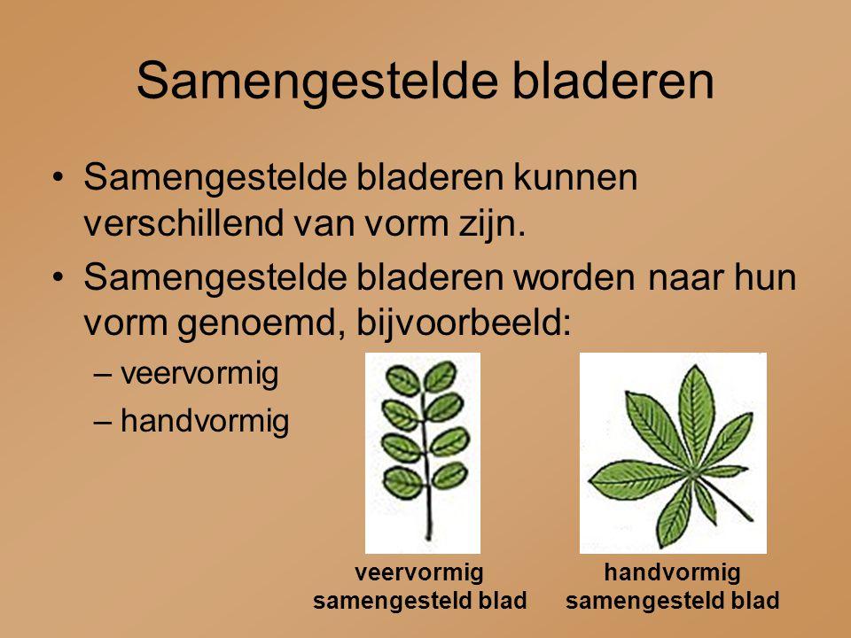 Samengestelde bladeren Samengestelde bladeren kunnen verschillend van vorm zijn. Samengestelde bladeren worden naar hun vorm genoemd, bijvoorbeeld: –v