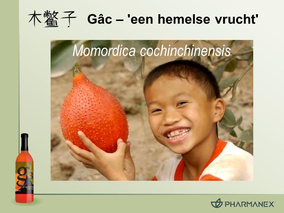 Gâc – een hemelse vrucht Momordica cochinchinensis