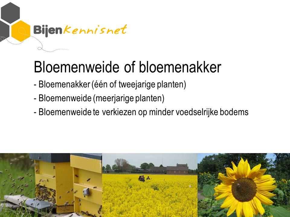 Bloemenweide of bloemenakker - Bloemenakker (één of tweejarige planten) - Bloemenweide (meerjarige planten) - Bloemenweide te verkiezen op minder voedselrijke bodems