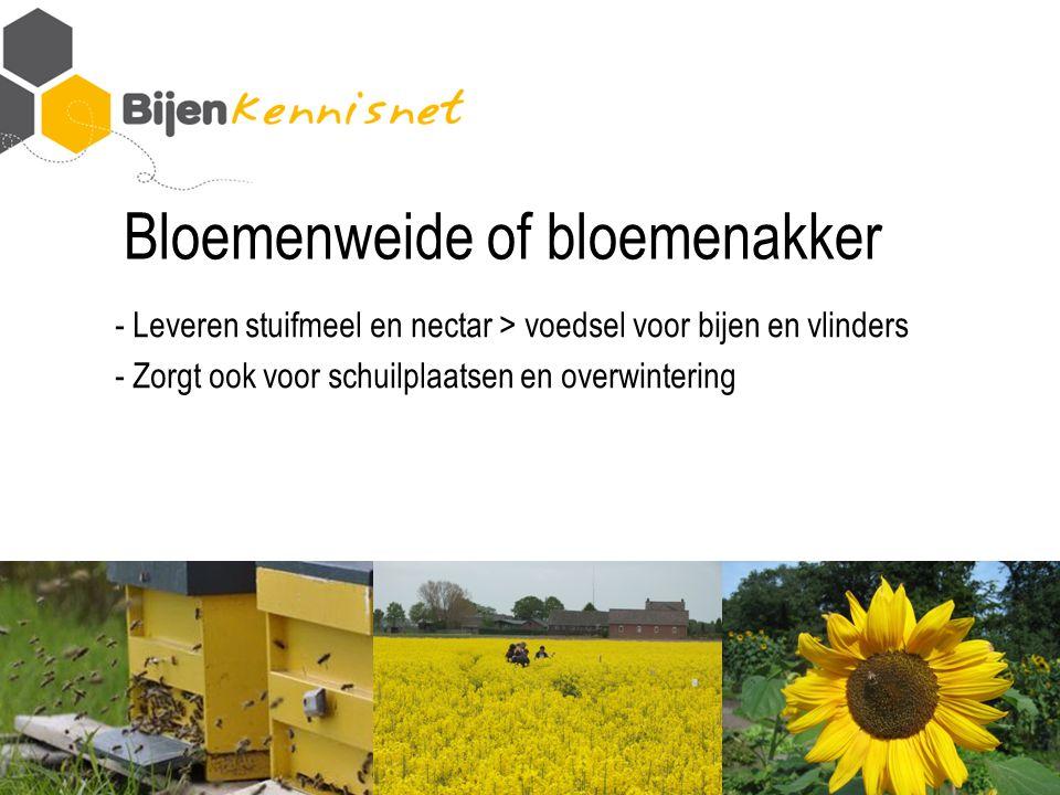 Bloemenweide of bloemenakker - Leveren stuifmeel en nectar > voedsel voor bijen en vlinders - Zorgt ook voor schuilplaatsen en overwintering