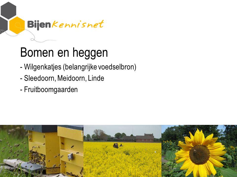 Bomen en heggen - Wilgenkatjes (belangrijke voedselbron) - Sleedoorn, Meidoorn, Linde - Fruitboomgaarden
