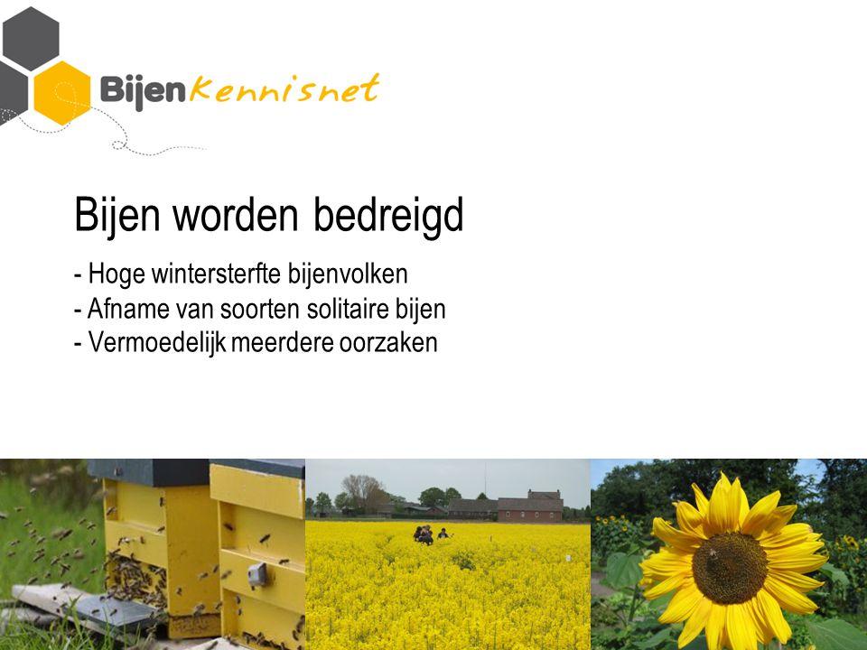 Bijen worden bedreigd - Hoge wintersterfte bijenvolken - Afname van soorten solitaire bijen - Vermoedelijk meerdere oorzaken