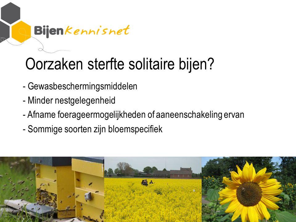 Oorzaken sterfte solitaire bijen.