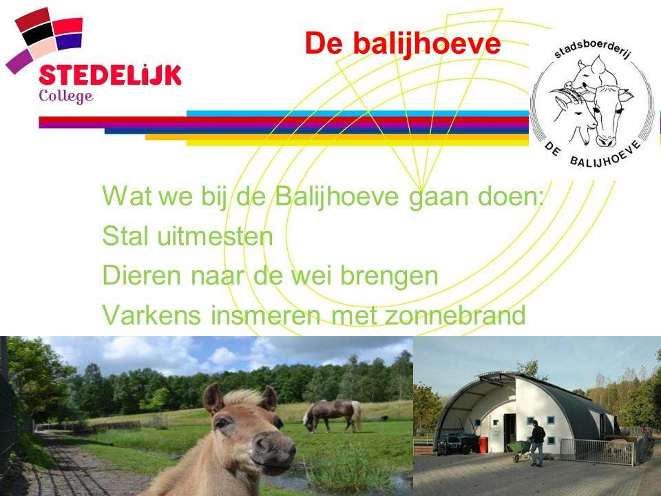 www.stedelijk-college.nl De balijhoeve  Wat we bij de Balijhoeve gaan doen:  Stal uitmesten  Dieren naar de wei brengen  Varkens insmeren met zonn