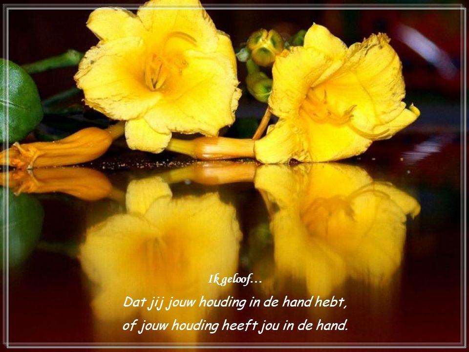 Ik geloof… Dat jij jouw houding in de hand hebt, of jouw houding heeft jou in de hand.
