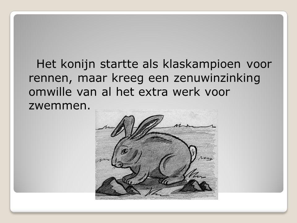 Het konijn startte als klaskampioen voor rennen, maar kreeg een zenuwinzinking omwille van al het extra werk voor zwemmen.