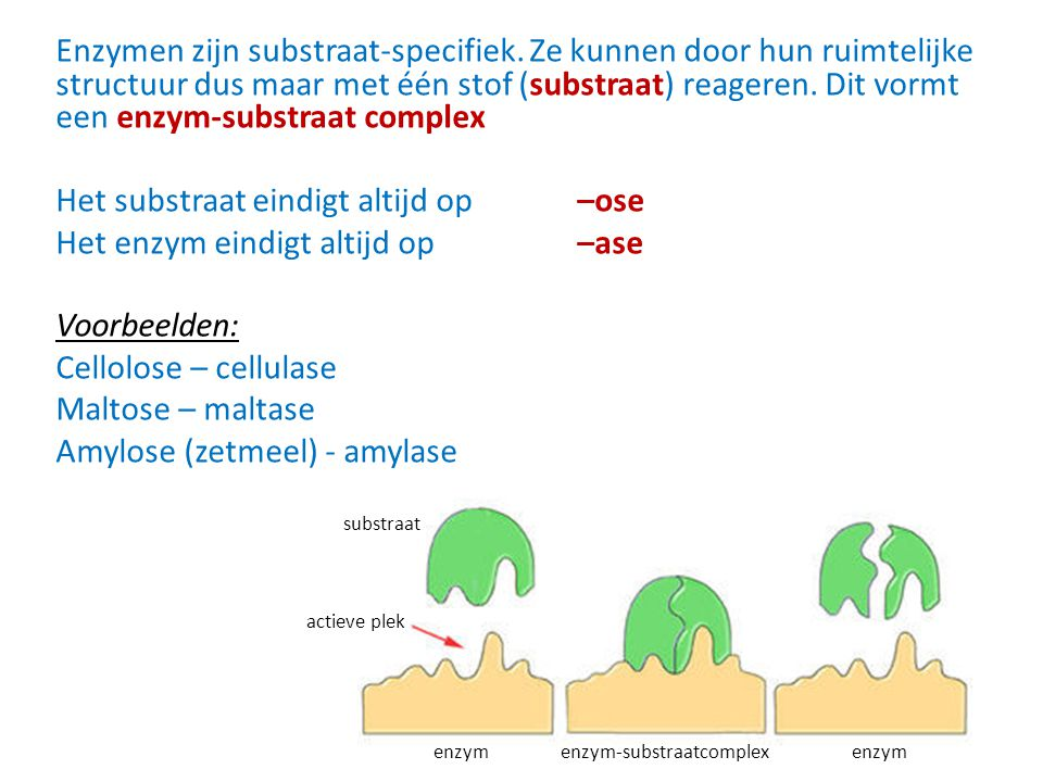 Enzymen zijn substraat-specifiek. Ze kunnen door hun ruimtelijke structuur dus maar met één stof (substraat) reageren. Dit vormt een enzym-substraat c