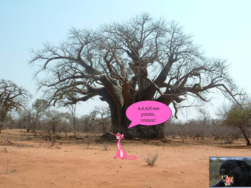 Ik ben in Zuid-Afrika