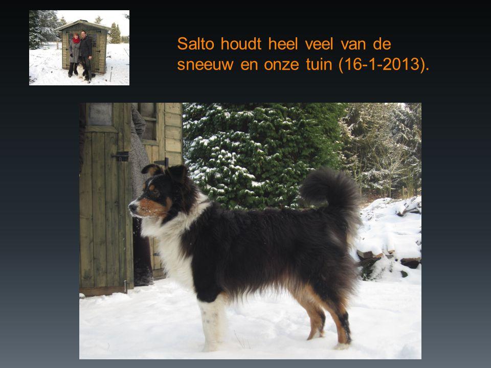 Salto houdt heel veel van de sneeuw en onze tuin (16-1-2013).