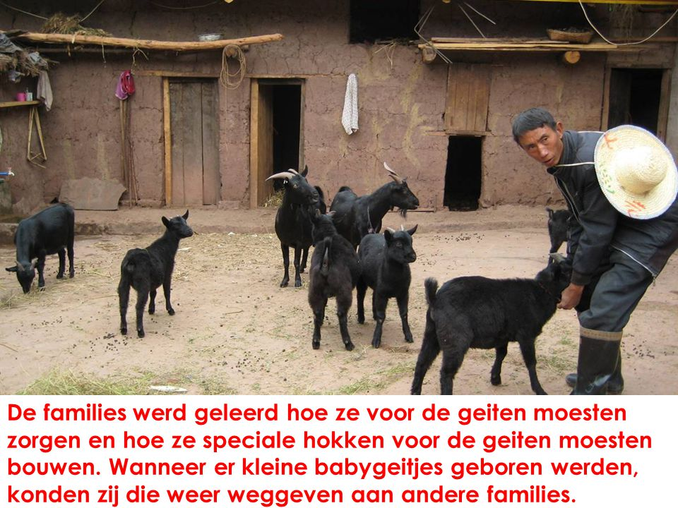 De families werd geleerd hoe ze voor de geiten moesten zorgen en hoe ze speciale hokken voor de geiten moesten bouwen.