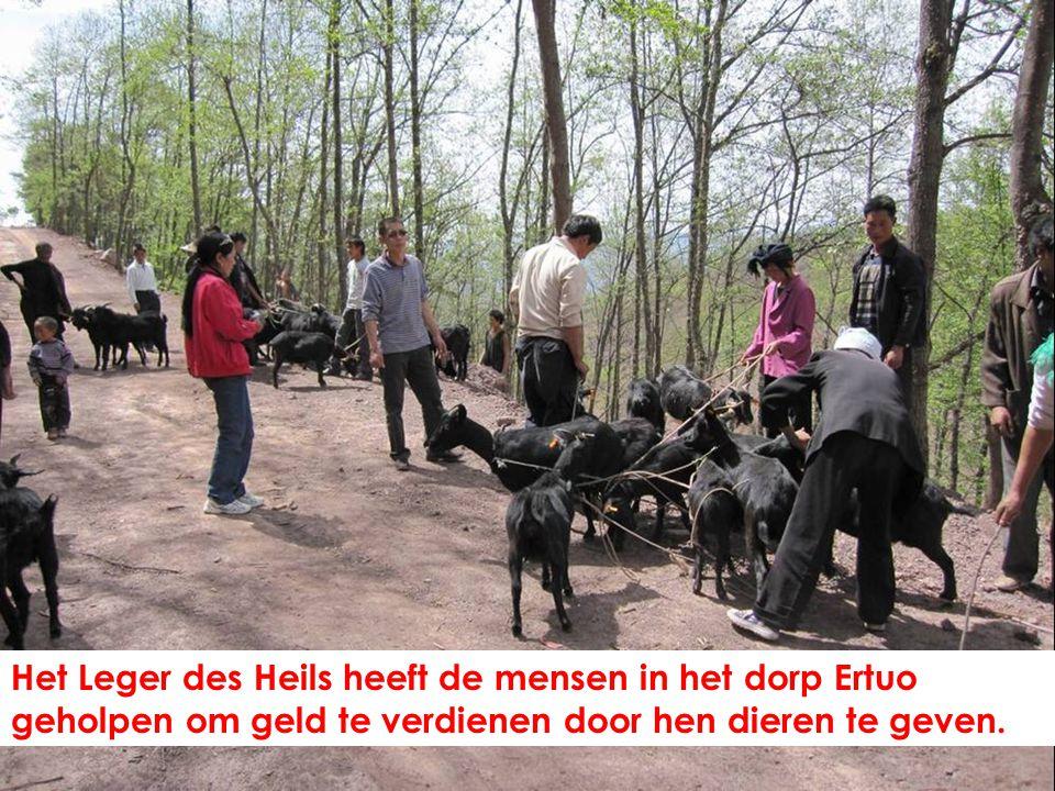 Het Leger des Heils heeft de mensen in het dorp Ertuo geholpen om geld te verdienen door hen dieren te geven.